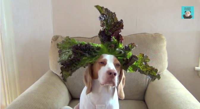 Just a dog balancing vegetables on it´s head