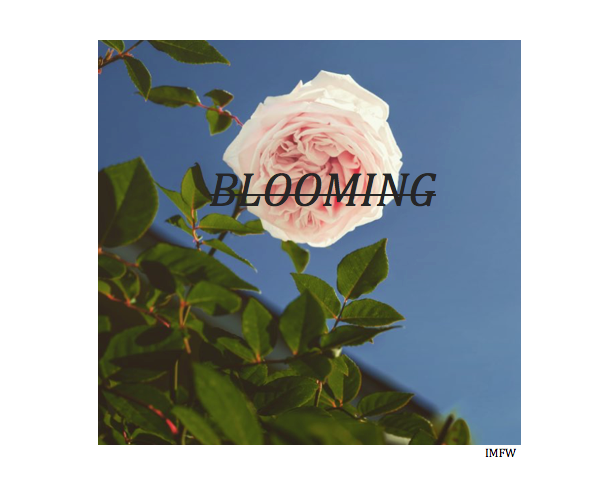 Listen to the album 'Blooming' by IMFW